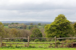 Our large garden has a great view over Ashdown Forest